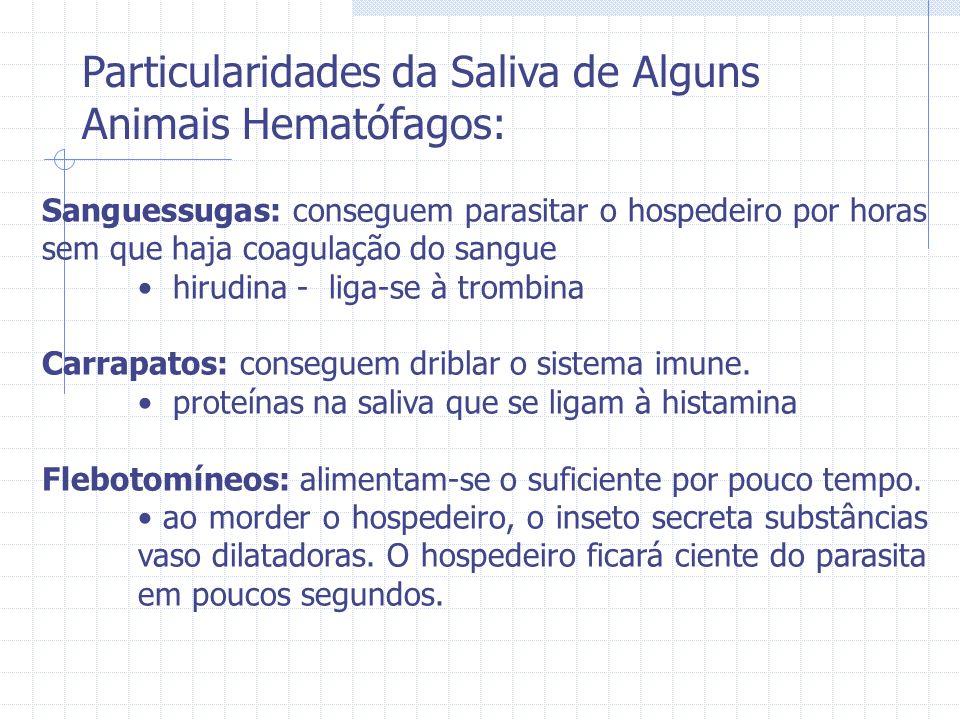 Preparação dos eritrócitos de coelho: -eritrócito lavado 3x em GHB – EDTA -armazenado a 4°C por uma semana -dia do experimento: lava-se os eritrócitos 3x Mg – EGTA Ensaio: -soro humano (50 ml) diluído em Mg – EGTA 90% hemólise -25 ml de saliva (procedimento idêntico ao descrito no ensaio da via clássica) Procura por hemolisina na saliva de flebotomínio -protocolo da via clássica: soro humano foi substituído por solução salina -usado 20 lobos de glândula salivar em cada teste -Lu.
