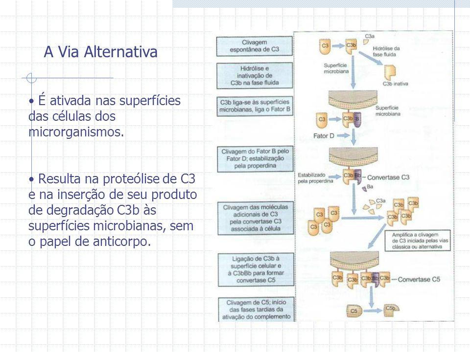 A Via Alternativa É ativada nas superfícies das células dos microrganismos. Resulta na proteólise de C3 e na inserção de seu produto de degradação C3b
