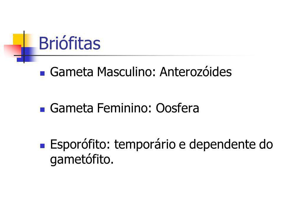 Briófitas Gameta Masculino: Anterozóides Gameta Feminino: Oosfera Esporófito: temporário e dependente do gametófito.
