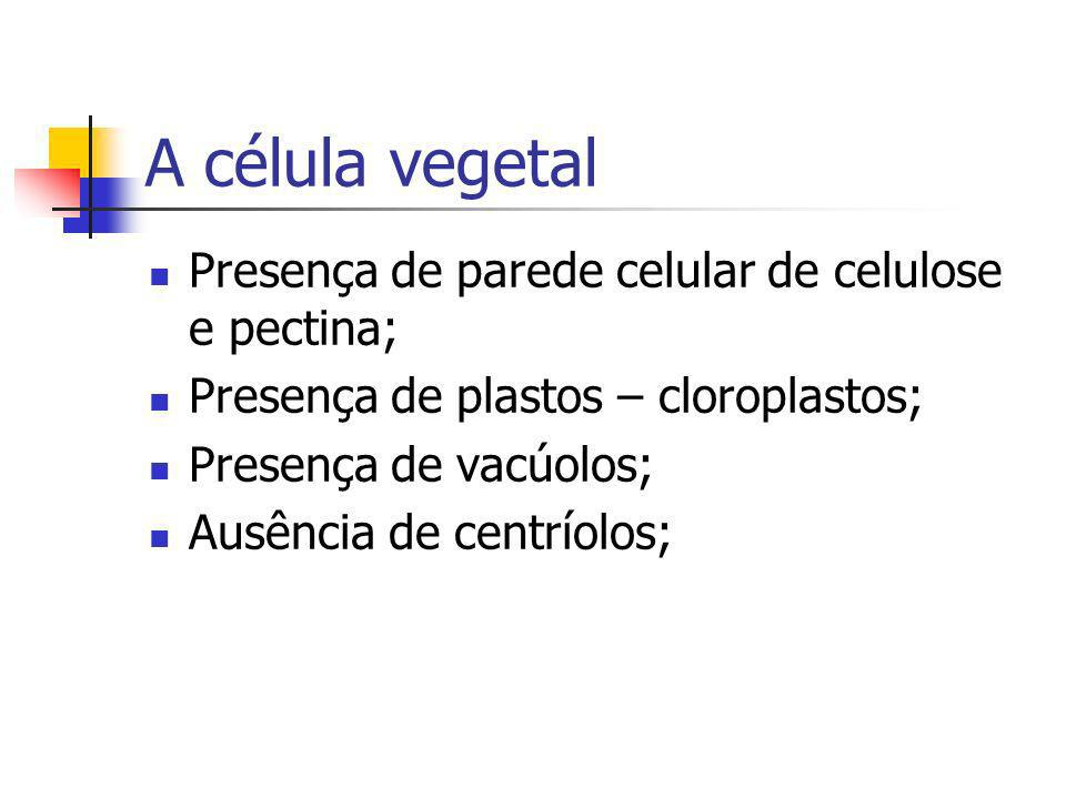 A célula vegetal Presença de parede celular de celulose e pectina; Presença de plastos – cloroplastos; Presença de vacúolos; Ausência de centríolos;