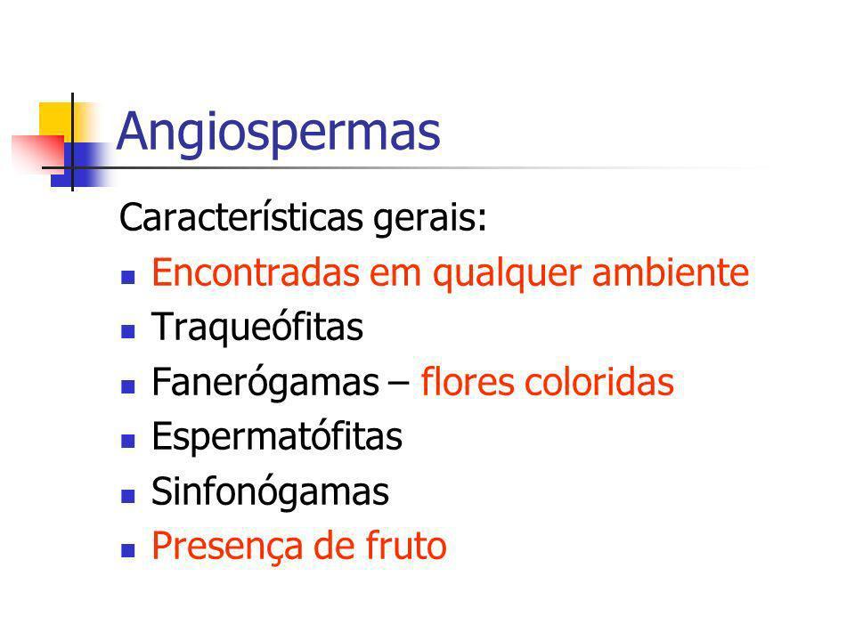Angiospermas Características gerais: Encontradas em qualquer ambiente Traqueófitas Fanerógamas – flores coloridas Espermatófitas Sinfonógamas Presença