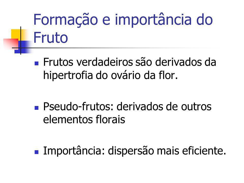 Formação e importância do Fruto Frutos verdadeiros são derivados da hipertrofia do ovário da flor. Pseudo-frutos: derivados de outros elementos florai