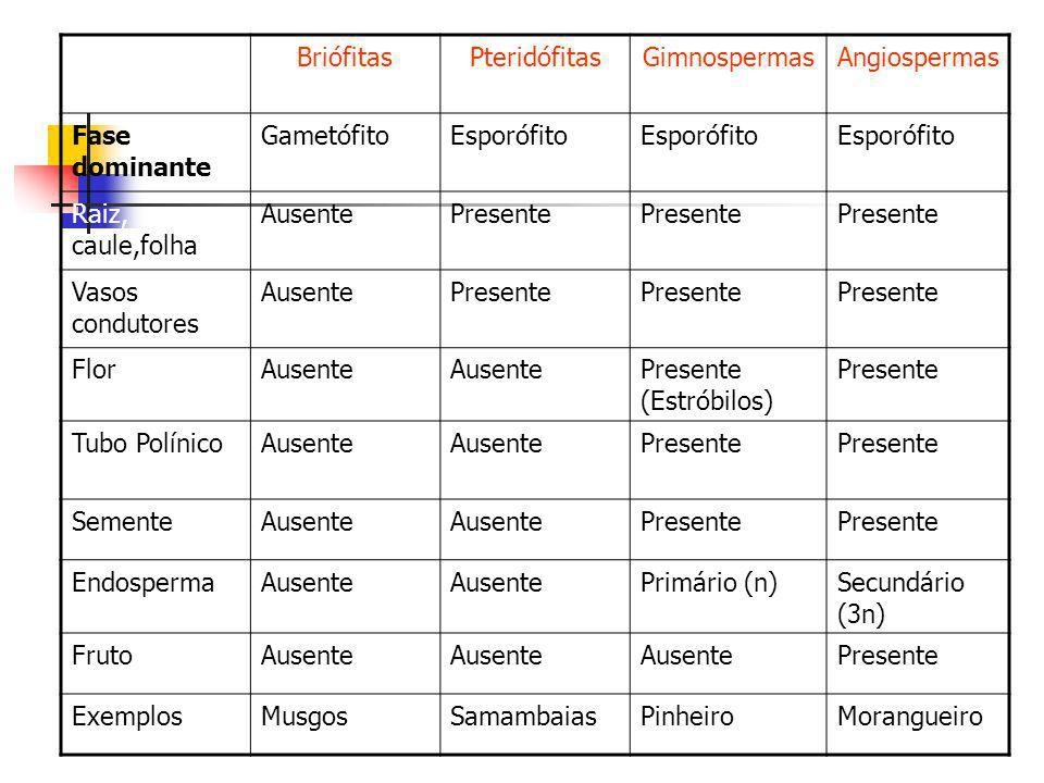 BriófitasPteridófitasGimnospermasAngiospermas Fase dominante GametófitoEsporófito Raiz, caule,folha AusentePresente Vasos condutores AusentePresente F