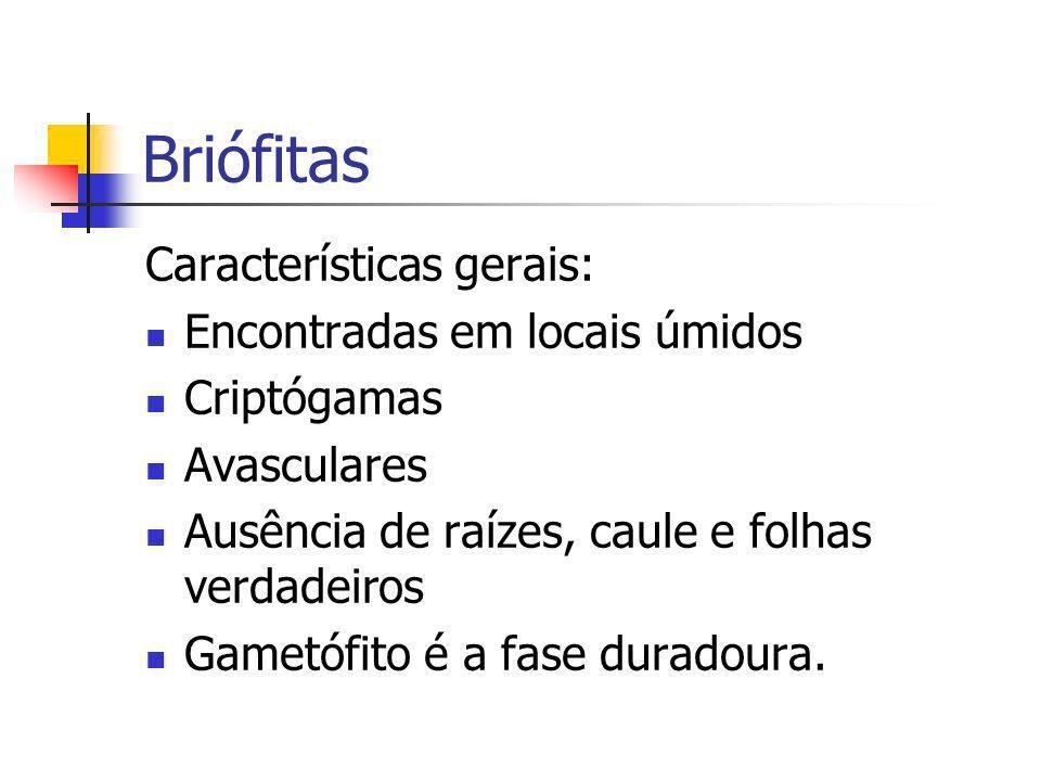 Briófitas Características gerais: Encontradas em locais úmidos Criptógamas Avasculares Ausência de raízes, caule e folhas verdadeiros Gametófito é a f