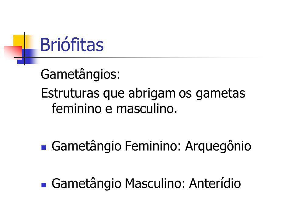 Briófitas Gametângios: Estruturas que abrigam os gametas feminino e masculino. Gametângio Feminino: Arquegônio Gametângio Masculino: Anterídio