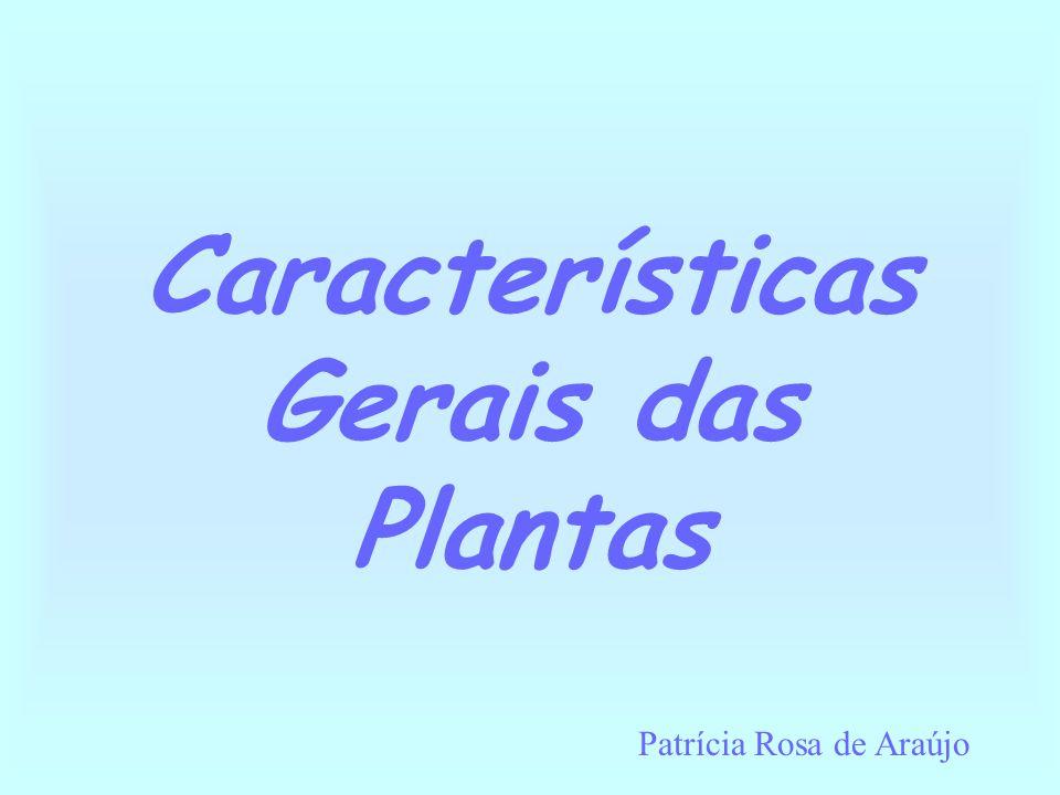 Características Gerais das Plantas Patrícia Rosa de Araújo