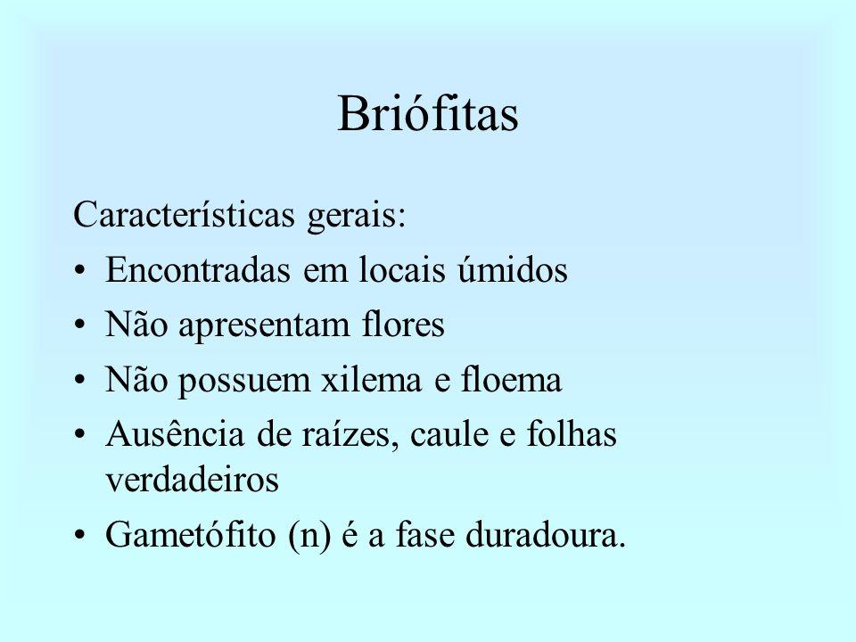 Briófitas Características gerais: Encontradas em locais úmidos Não apresentam flores Não possuem xilema e floema Ausência de raízes, caule e folhas ve