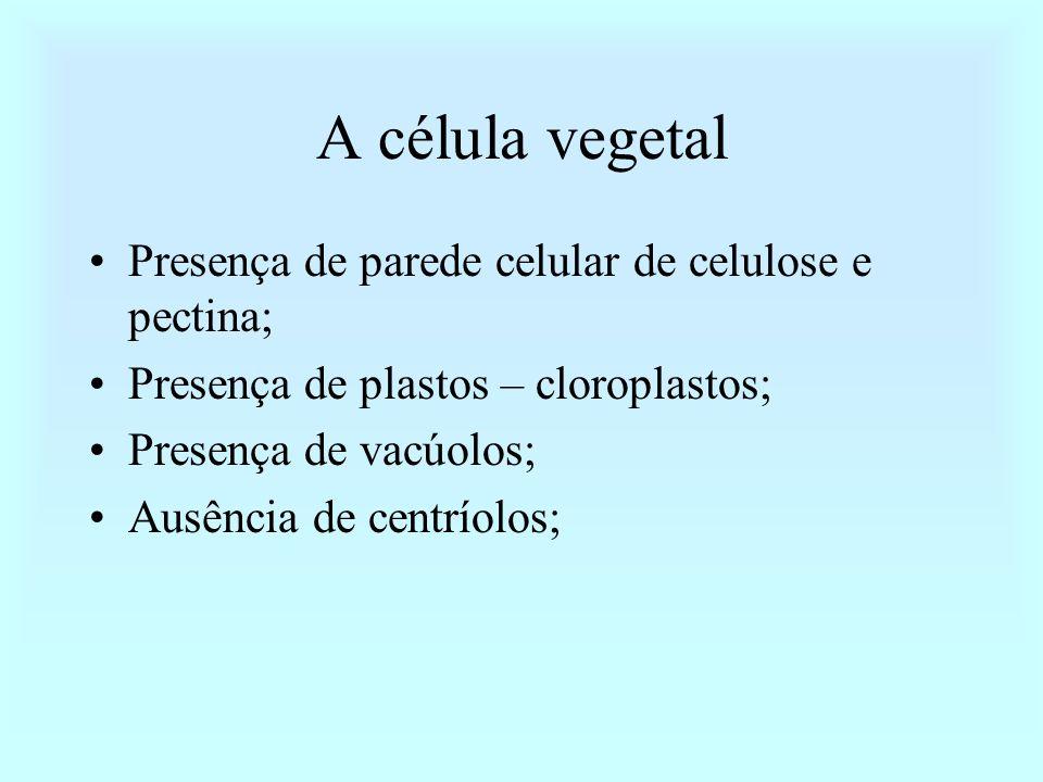 Estigma Estilete Ovário Antera Filete