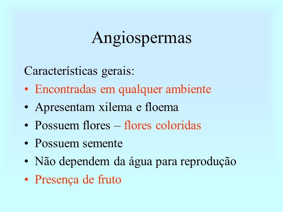 Angiospermas Características gerais: Encontradas em qualquer ambiente Apresentam xilema e floema Possuem flores – flores coloridas Possuem semente Não