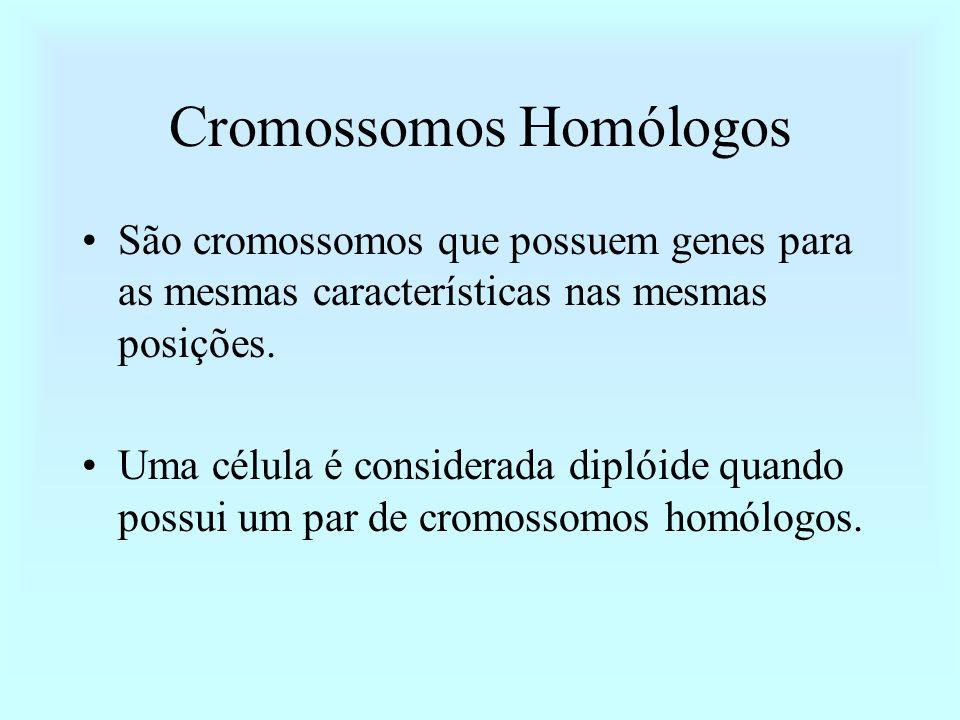 Cromossomos Homólogos São cromossomos que possuem genes para as mesmas características nas mesmas posições. Uma célula é considerada diplóide quando p
