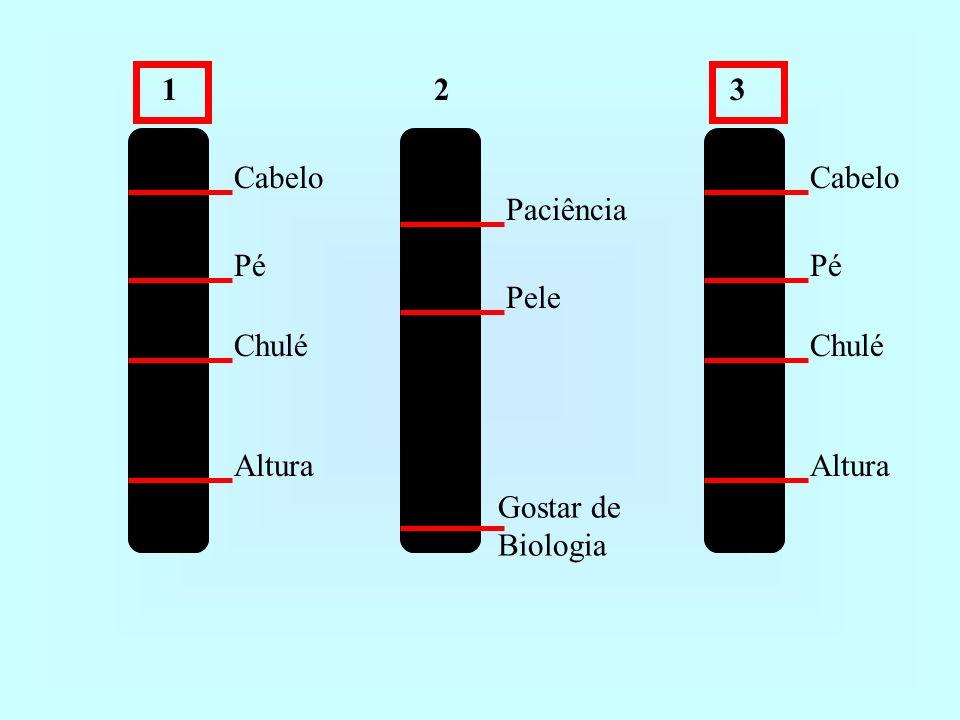 123 Cabelo Pé Chulé Altura Paciência Pele Gostar de Biologia