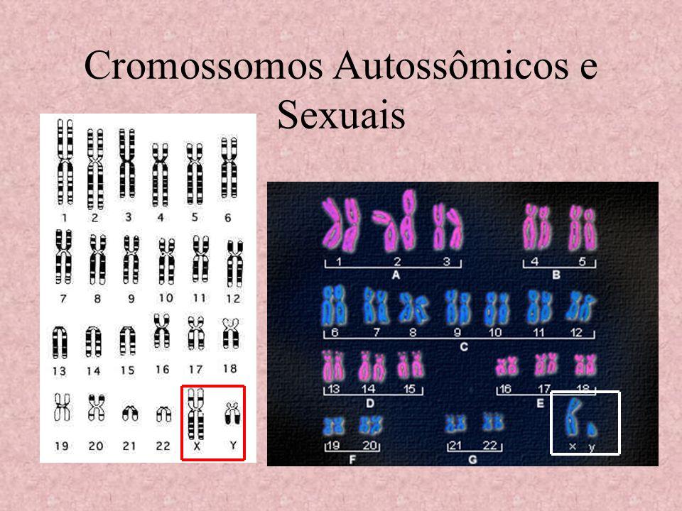 Herança ligada ao X recessiva O fenótipo aparece em todos os homens que apresentam o alelo, mas as mulheres só expressam o fenótipo se em homozigose recessiva.