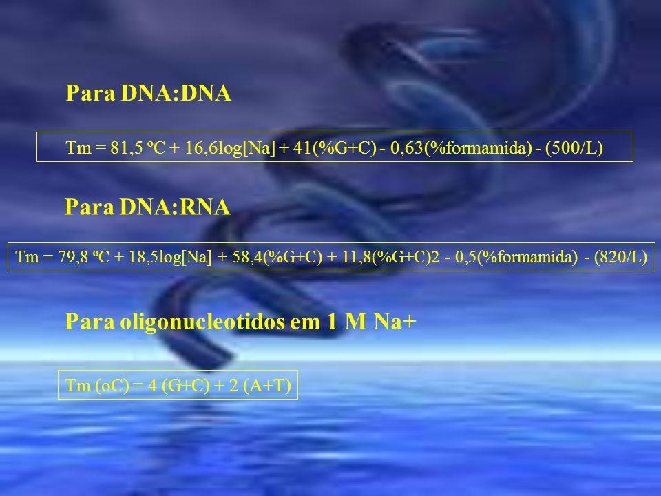 Tm = 81,5 ºC + 16,6log[Na] + 41(%G+C) - 0,63(%formamida) - (500/L) Tm = 79,8 ºC + 18,5log[Na] + 58,4(%G+C) + 11,8(%G+C)2 - 0,5(%formamida) - (820/L) P