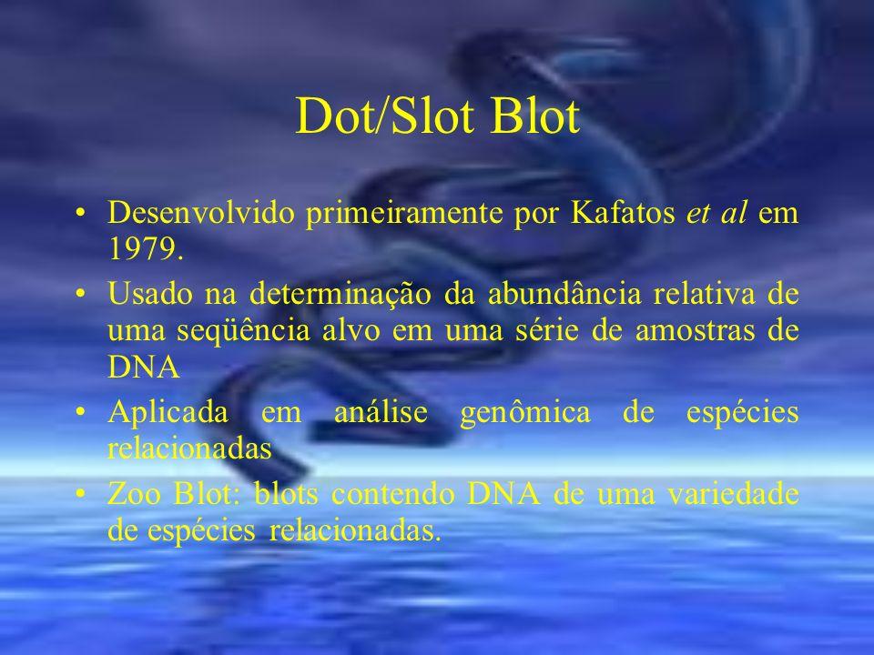 Dot/Slot Blot Desenvolvido primeiramente por Kafatos et al em 1979. Usado na determinação da abundância relativa de uma seqüência alvo em uma série de