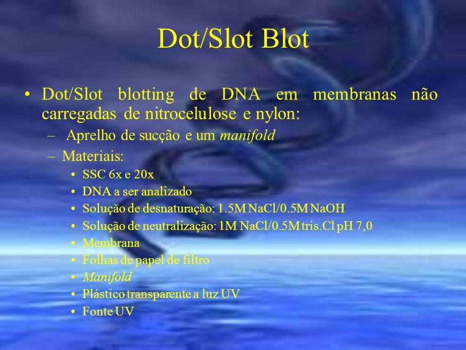 Dot/Slot Blot Dot/Slot blotting de DNA em membranas não carregadas de nitrocelulose e nylon: – Aprelho de sucção e um manifold –Materiais: SSC 6x e 20