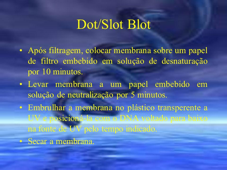 Dot/Slot Blot Após filtragem, colocar membrana sobre um papel de filtro embebido em solução de desnaturação por 10 minutos. Levar membrana a um papel
