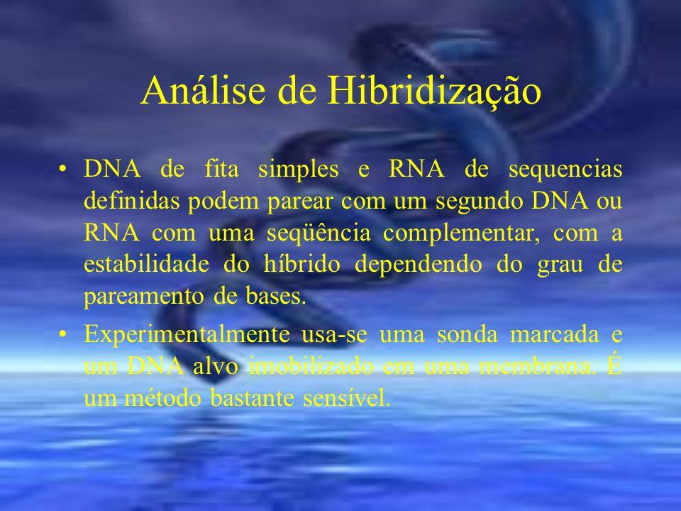Análise de Hibridização DNA de fita simples e RNA de sequencias definidas podem parear com um segundo DNA ou RNA com uma seqüência complementar, com a
