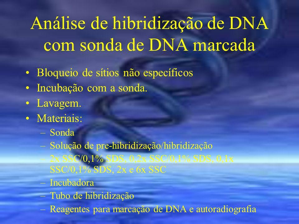 Análise de hibridização de DNA com sonda de DNA marcada Bloqueio de sítios não específicos Incubação com a sonda. Lavagem. Materiais: –Sonda –Solução