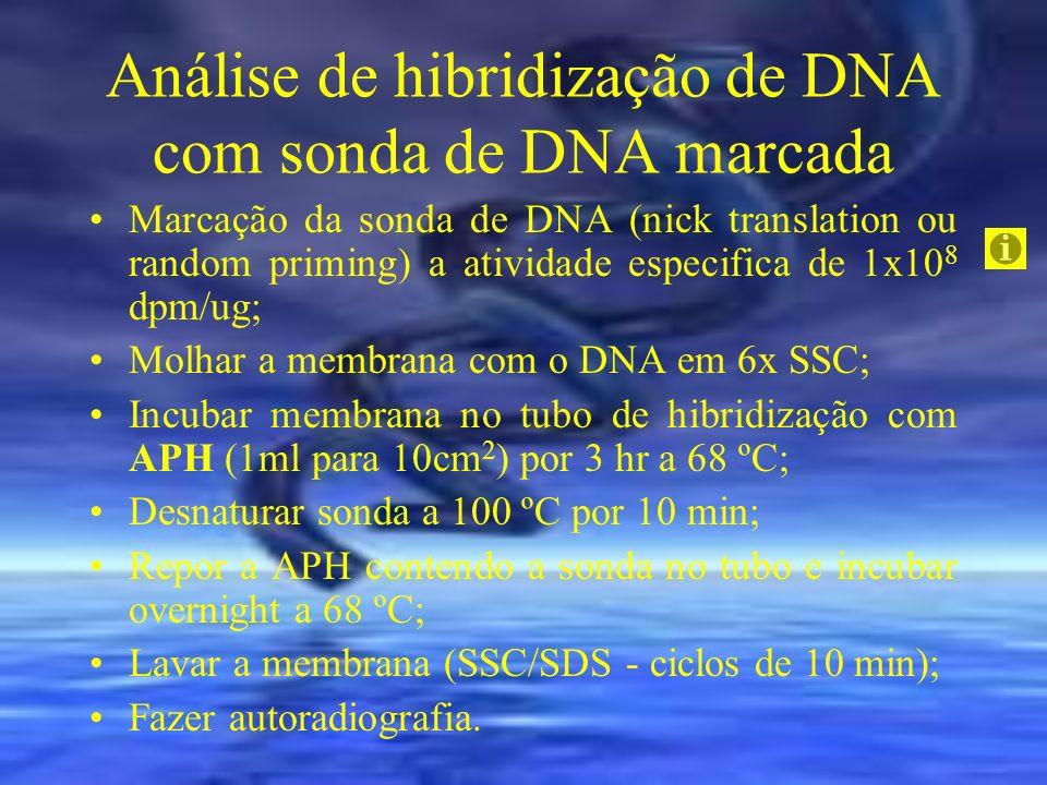 Análise de hibridização de DNA com sonda de DNA marcada Marcação da sonda de DNA (nick translation ou random priming) a atividade especifica de 1x10 8