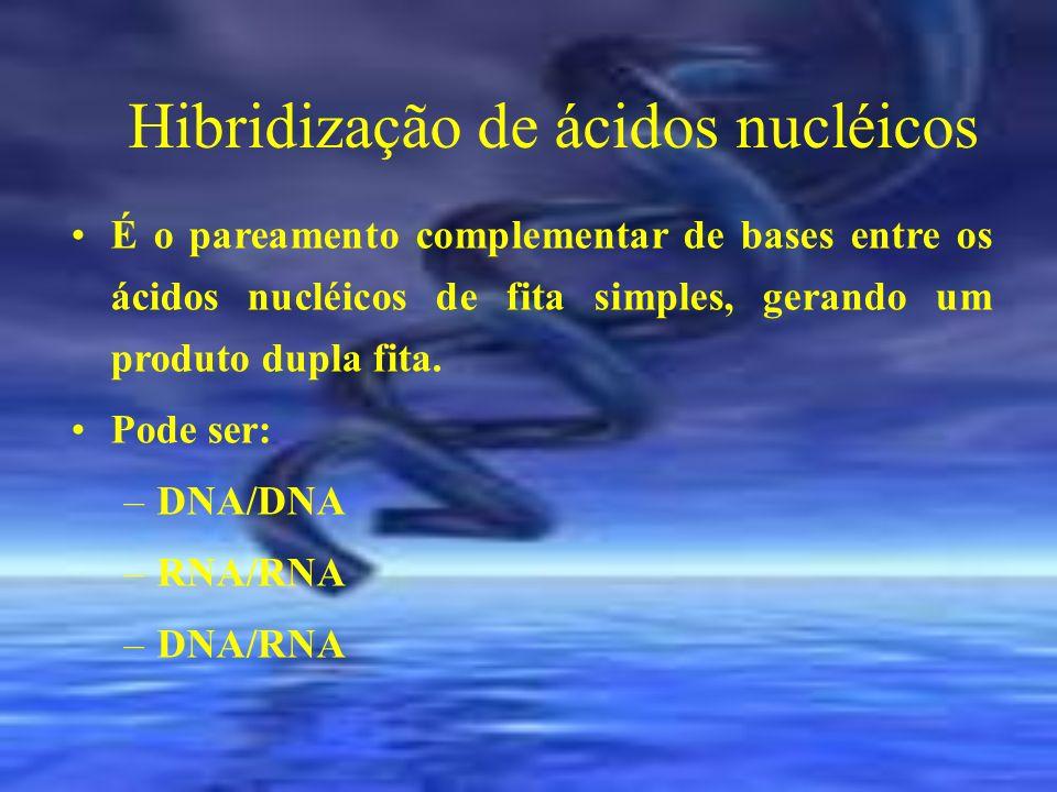 Hibridização de ácidos nucléicos É o pareamento complementar de bases entre os ácidos nucléicos de fita simples, gerando um produto dupla fita. Pode s