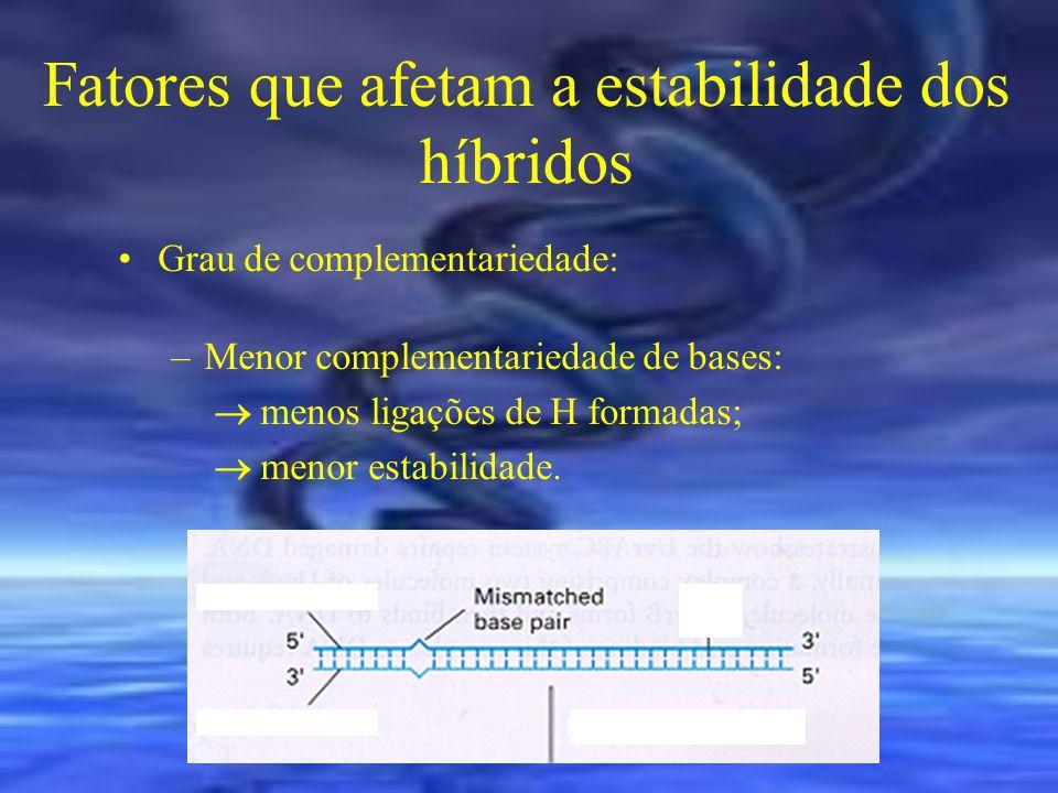 Fatores que afetam a estabilidade dos híbridos Tamanho das fitas: –Maior tamanho (cDNAs >200pb): mais ligações de H; maior estabilidade do híbrido.