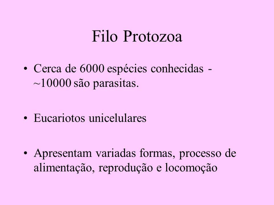 Filo Protozoa Cerca de 6000 espécies conhecidas - ~10000 são parasitas. Eucariotos unicelulares Apresentam variadas formas, processo de alimentação, r