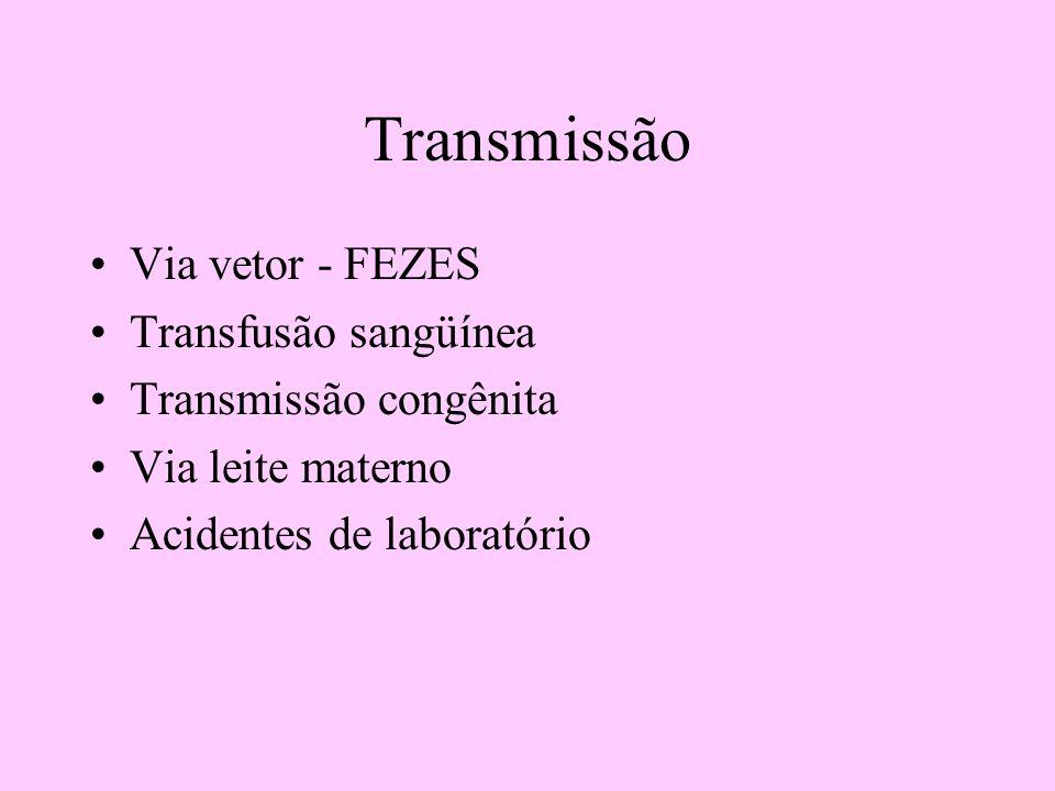 Transmissão Via vetor - FEZES Transfusão sangüínea Transmissão congênita Via leite materno Acidentes de laboratório