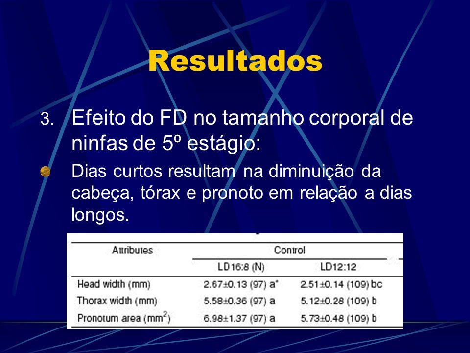 Resultados 3. Efeito do FD no tamanho corporal de ninfas de 5º estágio: Dias curtos resultam na diminuição da cabeça, tórax e pronoto em relação a dia