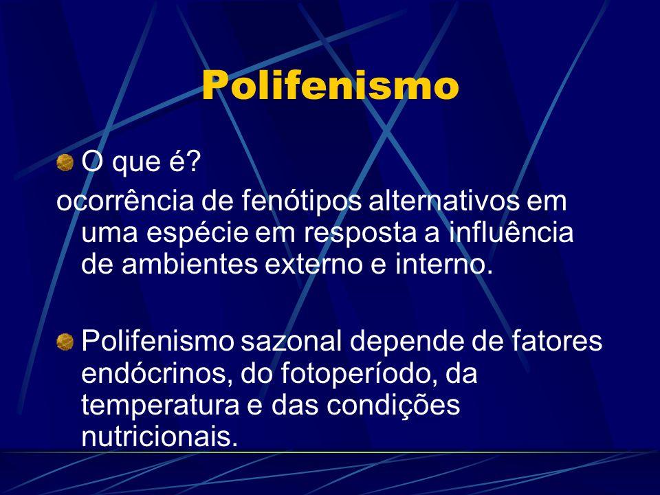 Polifenismo O que é? ocorrência de fenótipos alternativos em uma espécie em resposta a influência de ambientes externo e interno. Polifenismo sazonal