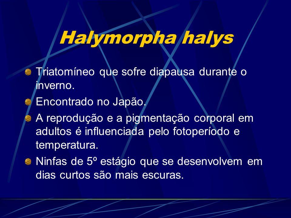 Halymorpha halys Triatomíneo que sofre diapausa durante o inverno. Encontrado no Japão. A reprodução e a pigmentação corporal em adultos é influenciad