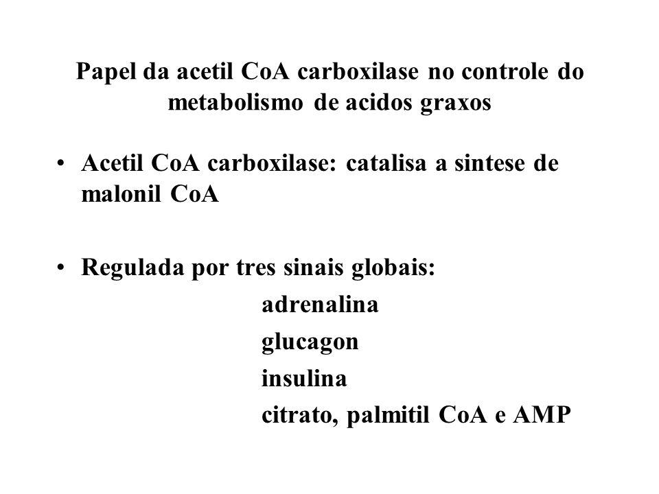 Alongamento e Insaturação de Ácidos Graxos Alongamento de Ácidos Graxos Ácido graxo sintase Palmitato Enzimas localizadas na membrana do retículo endoplasmático Microssomos Acil-CoA +Malonil-CoA Acil-CoA + CO 2 + CoA Insaturação de Ácidos Graxos Adição de ligações duplas em Acil-CoA Estearil-CoA + NADH +H +O 2 Oleil-CoA +NAD + + 2H 2 O