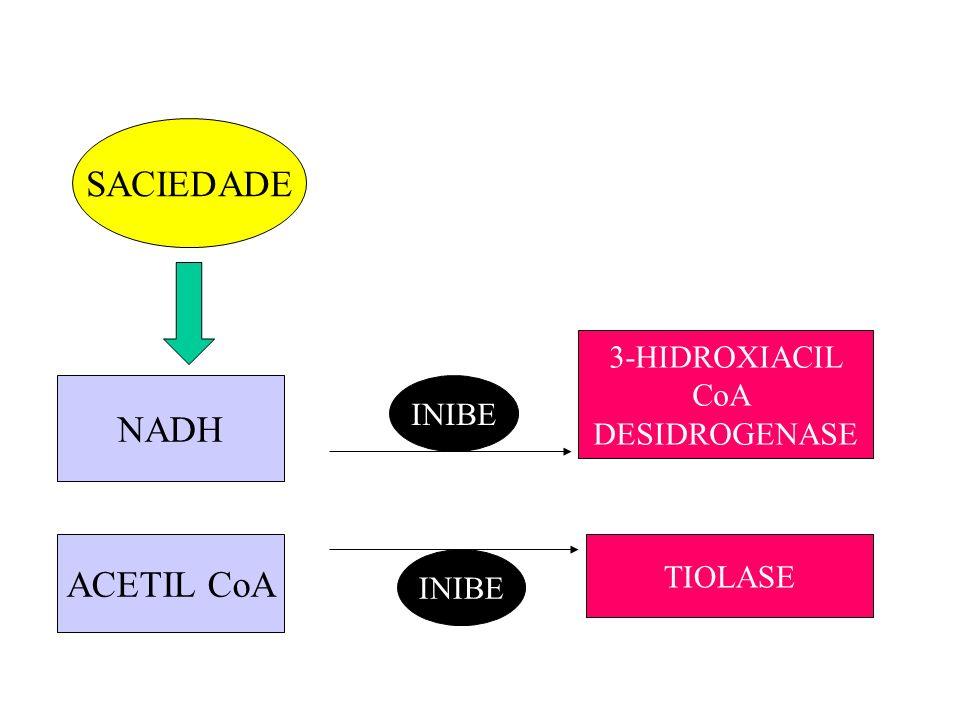 SACIEDADE NADH ACETIL CoA INIBE 3-HIDROXIACIL CoA DESIDROGENASE TIOLASE