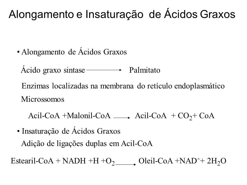 Alongamento e Insaturação de Ácidos Graxos Alongamento de Ácidos Graxos Ácido graxo sintase Palmitato Enzimas localizadas na membrana do retículo endo