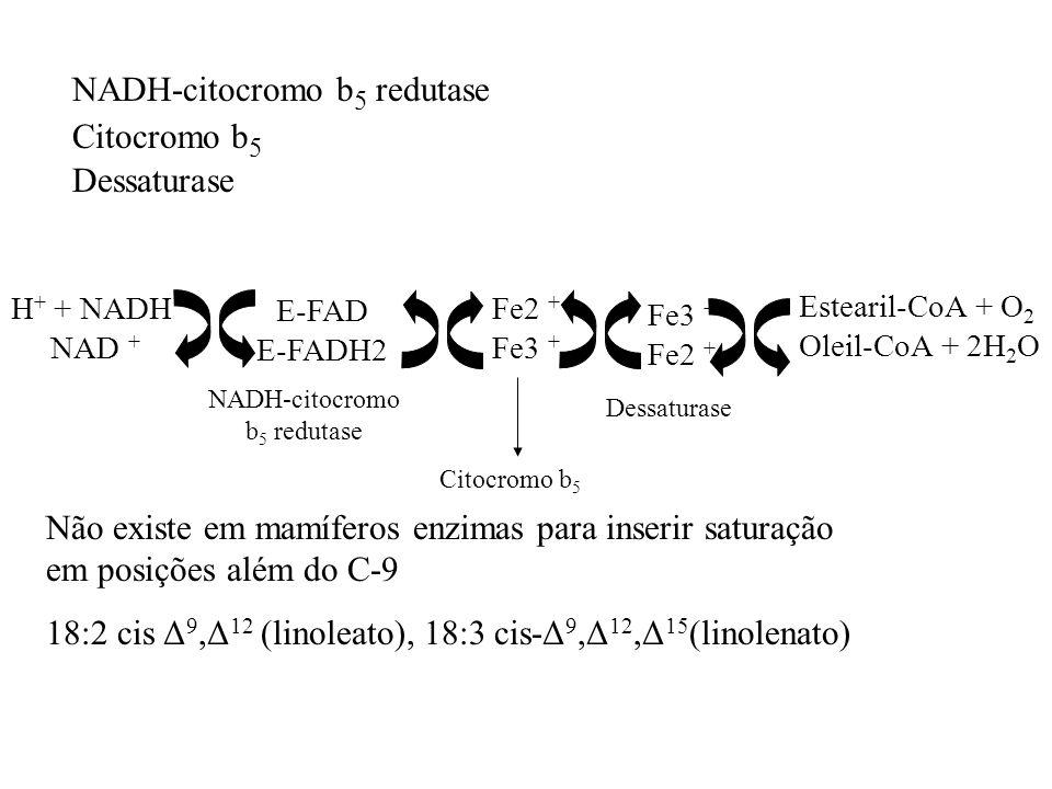 NADH-citocromo b 5 redutase Citocromo b 5 Dessaturase H + + NADH NAD + E-FAD E-FADH2 Fe2 + Fe3 + Fe2 + Estearil-CoA + O 2 Oleil-CoA + 2H 2 O NADH-cito