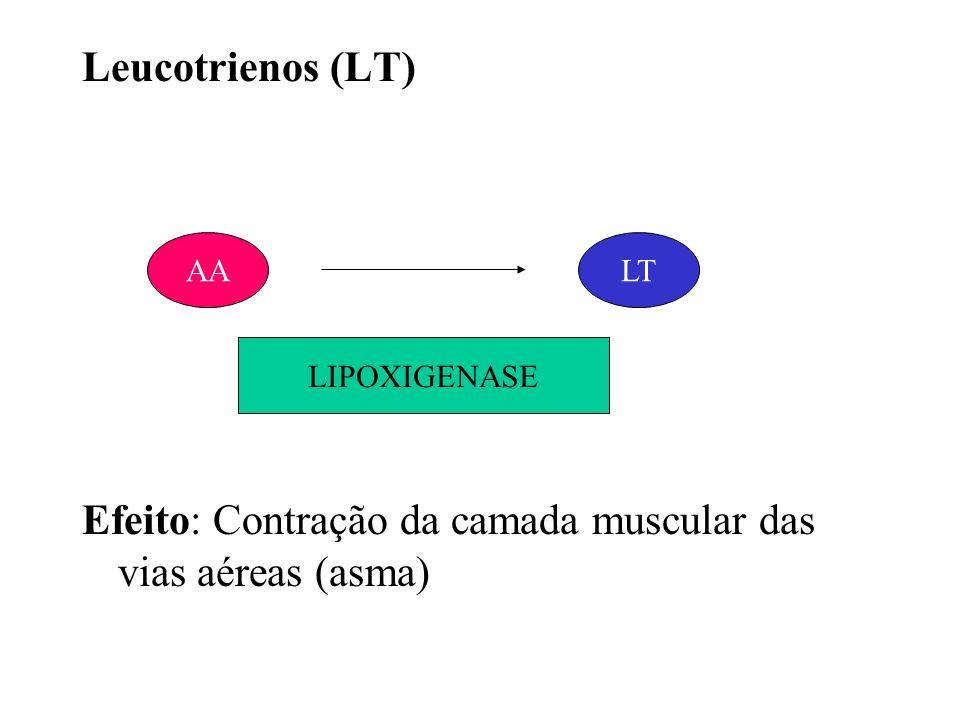 Leucotrienos (LT) Efeito: Contração da camada muscular das vias aéreas (asma) AALT LIPOXIGENASE