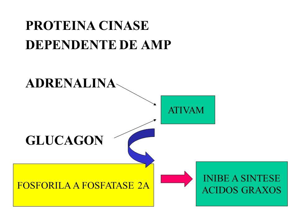 PROTEINA CINASE DEPENDENTE DE AMP ADRENALINA GLUCAGON ATIVAM FOSFORILA A FOSFATASE 2A INIBE A SINTESE ACIDOS GRAXOS