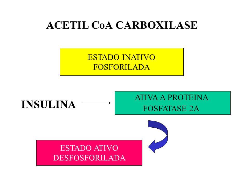 ACETIL CoA CARBOXILASE INSULINA ATIVA A PROTEINA FOSFATASE 2A ESTADO INATIVO FOSFORILADA ESTADO ATIVO DESFOSFORILADA