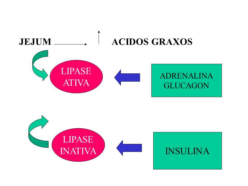 Tromboxanas (Tx) Produzidos por plaquetas Efeitos: Ativador de plaquetas Vasoconstritor PGH2 Tx TROMBOXANA SINTASE