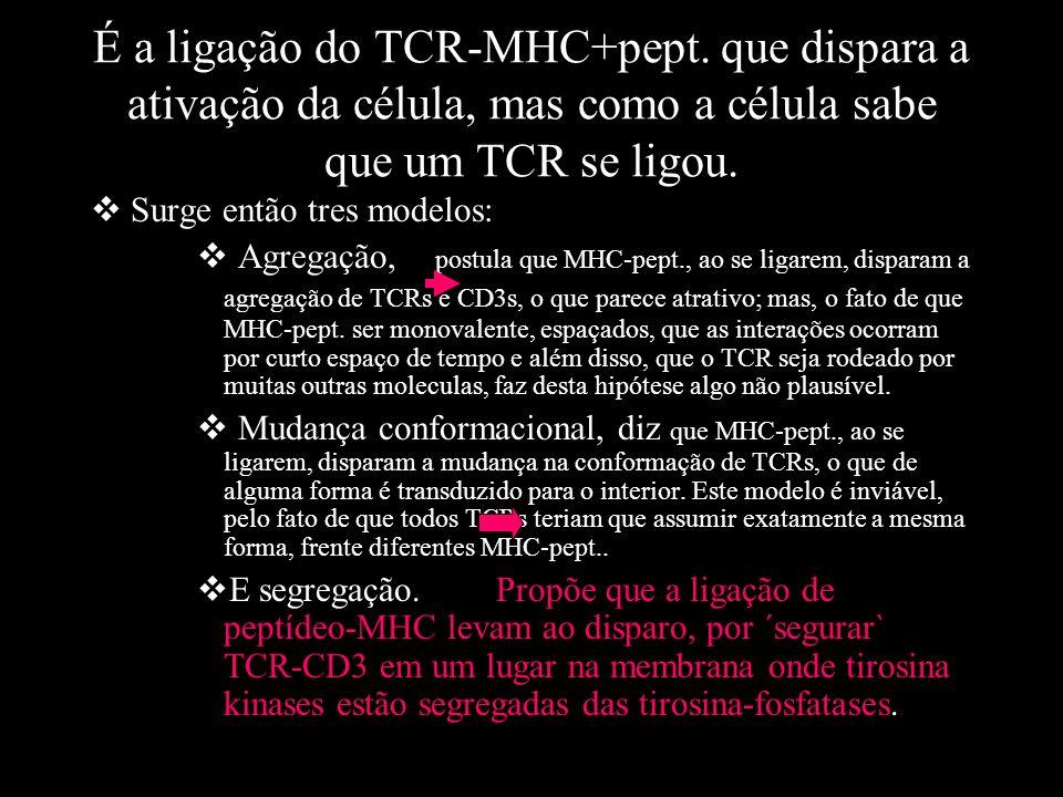 É a ligação do TCR-MHC+pept. que dispara a ativação da célula, mas como a célula sabe que um TCR se ligou. Surge então tres modelos: Agregação, postul