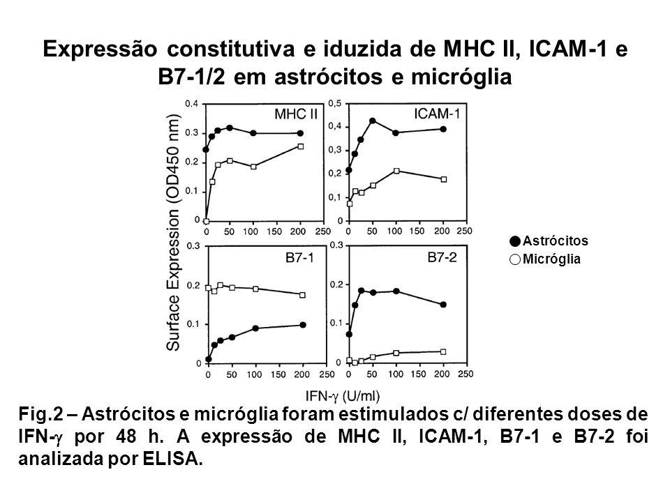 Expressão constitutiva e iduzida de MHC II, ICAM-1 e B7-1/2 em astrócitos e micróglia Fig.2 – Astrócitos e micróglia foram estimulados c/ diferentes d