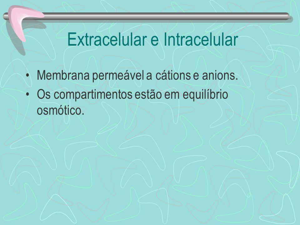 Extracelular e Intracelular Membrana permeável a cátions e anions. Os compartimentos estão em equilíbrio osmótico.