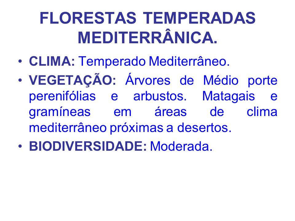 FLORESTAS TEMPERADAS MEDITERRÂNICA. CLIMA: Temperado Mediterrâneo. VEGETAÇÃO: Árvores de Médio porte perenifólias e arbustos. Matagais e gramíneas em