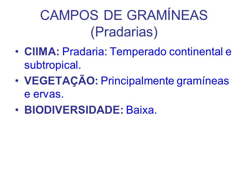 CAMPOS DE GRAMÍNEAS (Pradarias) ClIMA: Pradaria: Temperado continental e subtropical. VEGETAÇÃO: Principalmente gramíneas e ervas. BIODIVERSIDADE: Bai