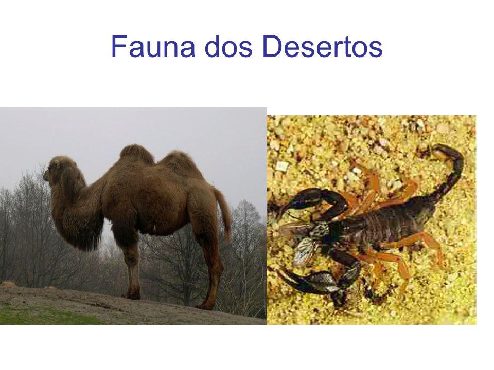 Fauna dos Desertos
