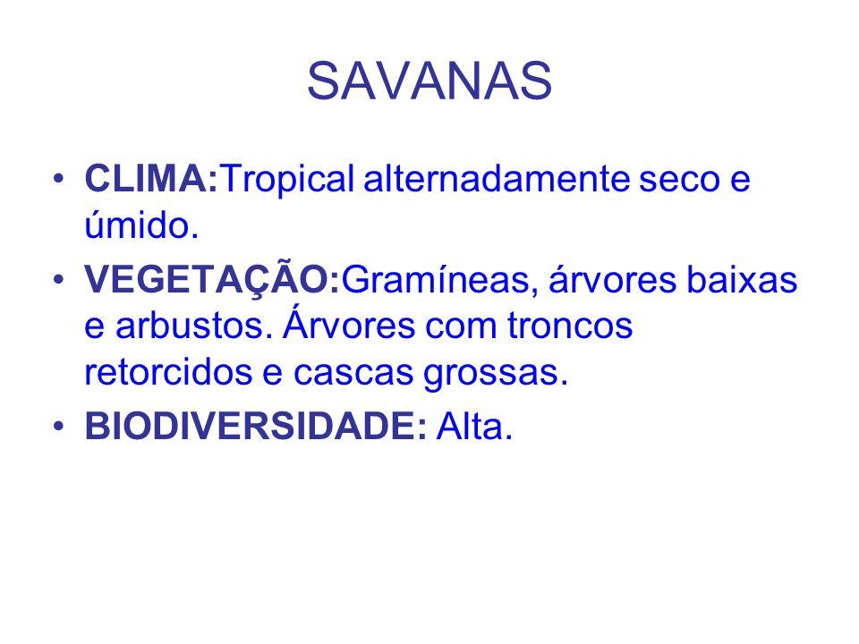 SAVANAS CLIMA:Tropical alternadamente seco e úmido. VEGETAÇÃO:Gramíneas, árvores baixas e arbustos. Árvores com troncos retorcidos e cascas grossas. B