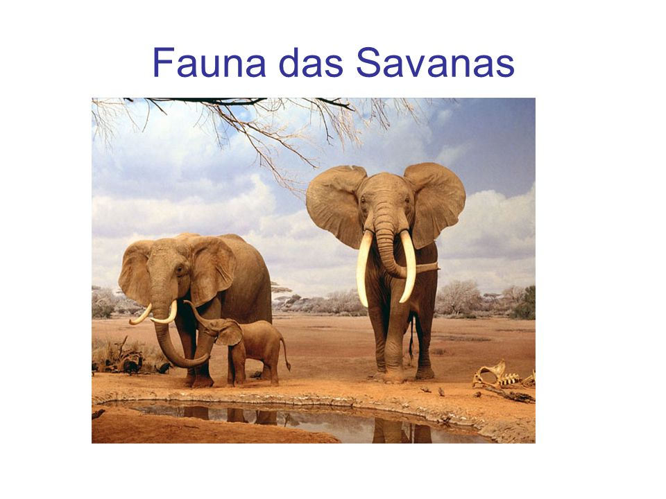 Fauna das Savanas