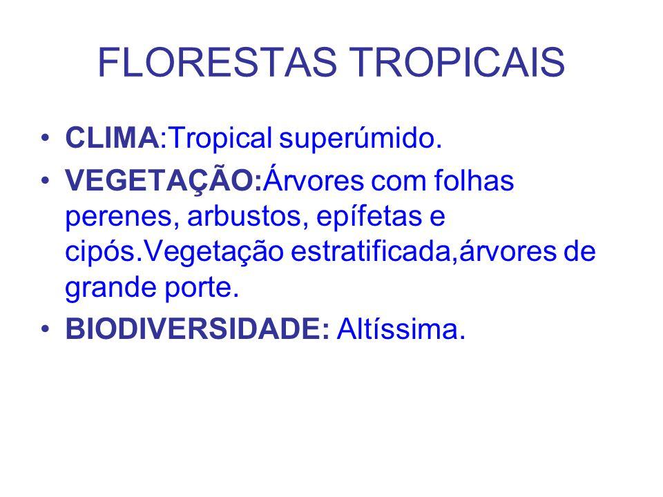 FLORESTAS TROPICAIS CLIMA:Tropical superúmido. VEGETAÇÃO:Árvores com folhas perenes, arbustos, epífetas e cipós.Vegetação estratificada,árvores de gra