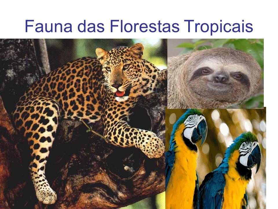 Fauna das Florestas Tropicais