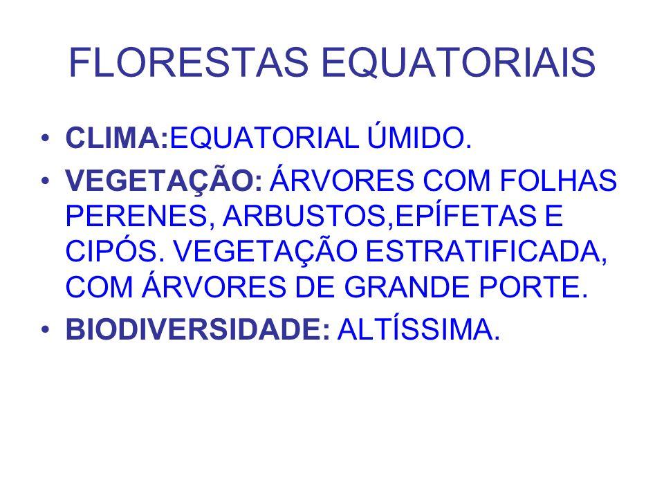 FLORESTAS EQUATORIAIS CLIMA:EQUATORIAL ÚMIDO. VEGETAÇÃO: ÁRVORES COM FOLHAS PERENES, ARBUSTOS,EPÍFETAS E CIPÓS. VEGETAÇÃO ESTRATIFICADA, COM ÁRVORES D