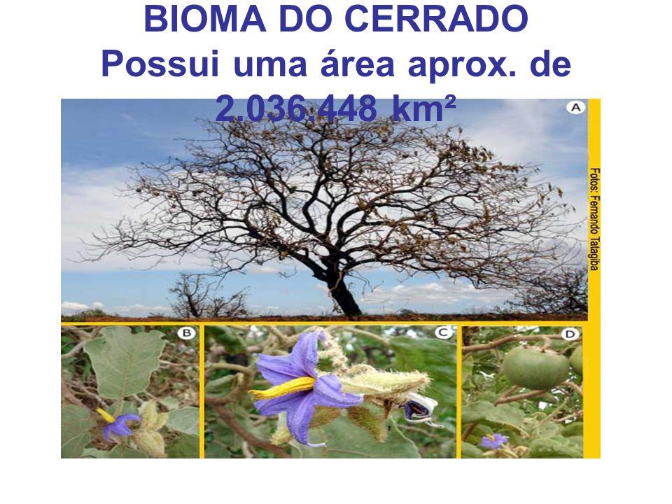 BIOMA DO CERRADO Possui uma área aprox. de 2.036.448 km²